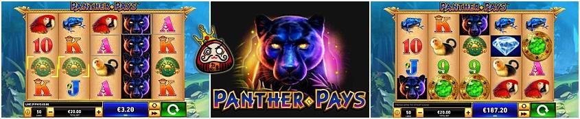 Panther Pays 注目の画像